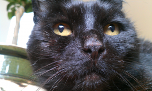 Inky our cat who brough much joy to our lives and met our contact needs